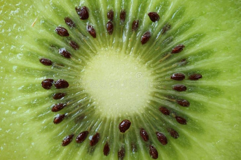 Tvärsnitt av vibrerande gröna nya och saftiga mogna Kiwi Fruit, makroskott för frukttextur royaltyfria foton