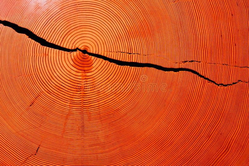 Tvärsnitt för trädstam royaltyfria bilder