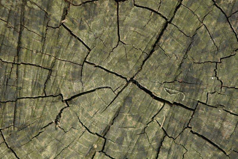 Download Tvärsnitttree arkivfoto. Bild av mellanrum, natur, texturerat - 287122