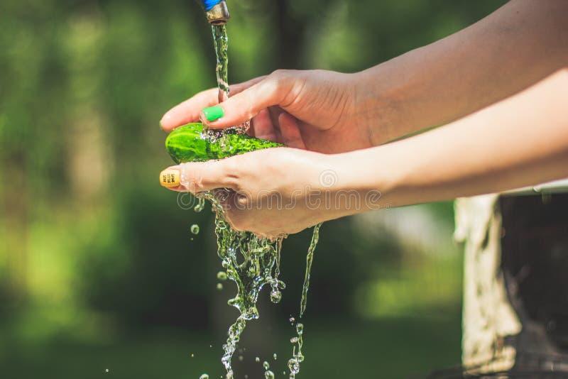 Tvätt av gurkorna i kvinnahänder med vattenfärgstänk på gårdbakgrunden arkivbilder