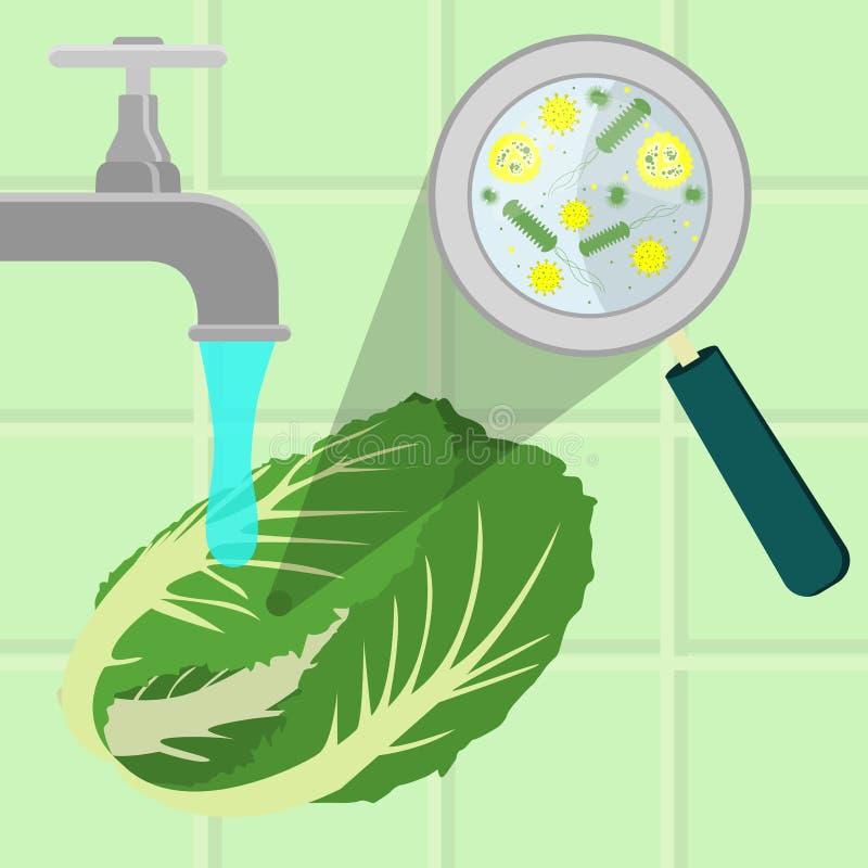 Tvättande kontaminerad kål stock illustrationer