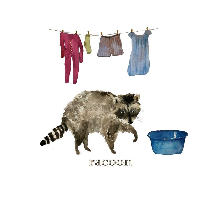 Tvättande torkdukar för gulligt tvättbjörndjur vattenfärg vektor illustrationer