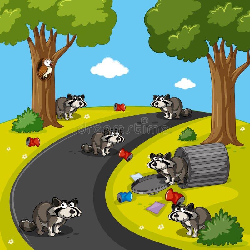 Tvättbjörnar i parkera mycket av avfall royaltyfri illustrationer