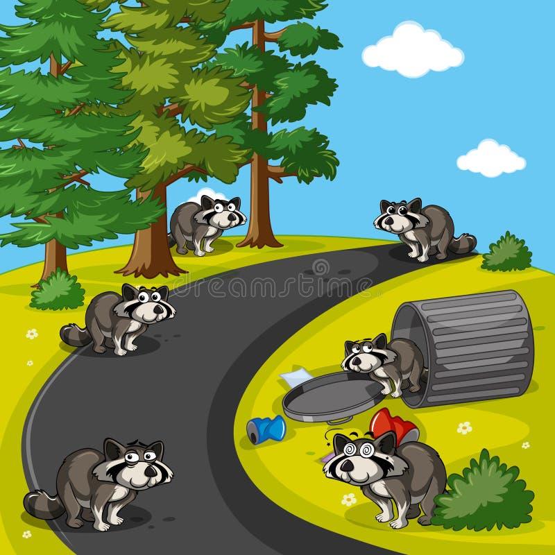 Tvättbjörnar som söker avfall parkerar in royaltyfri illustrationer