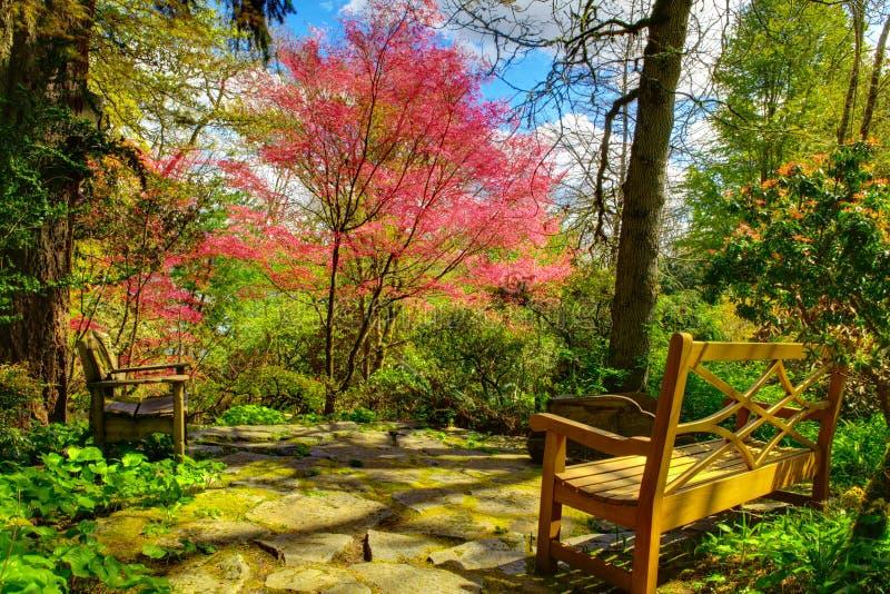 Två bänkar i den frodiga trädgården royaltyfri bild