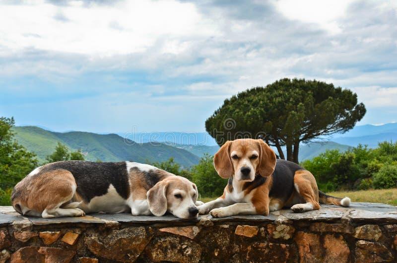 Två bögar vilar på en vägg i sommarsolen framför en vacker dal i södra Frankrike arkivfoton