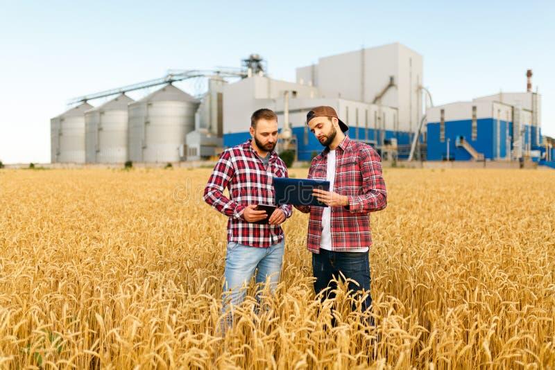 Två bönder står i ett vetefält med minnestavlan Agronomer diskuterar skörden och skördar bland öron av vete med korn royaltyfri foto