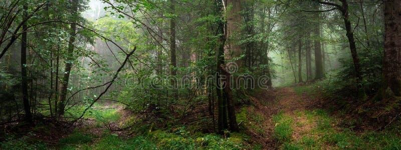 Två banor i skogen med dimma i panorama- arkivfoton