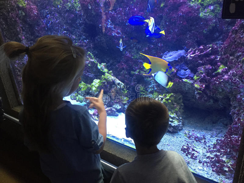 Två barn som beundrar den färgrika exotiska fisken i akvarium royaltyfria foton