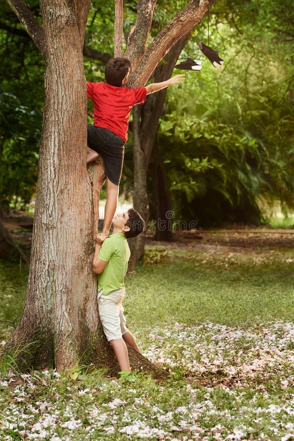 Två barn som hjälper och klättrar på träd parkerar in royaltyfri fotografi
