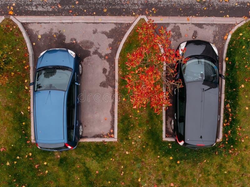 Två blåa bilar och svart som parkeras, i att intressera stället bland grönt gräs som beströs med gula höstsidor fotografering för bildbyråer