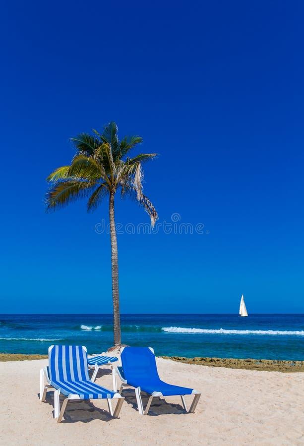 Två Chaise Lounges och palmträd royaltyfri foto
