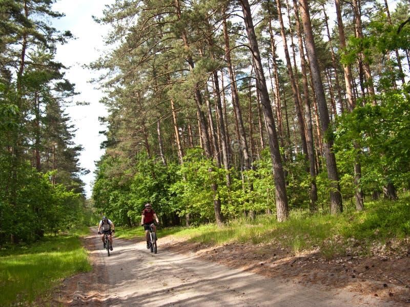 Två cyklister i grön skog royaltyfri fotografi