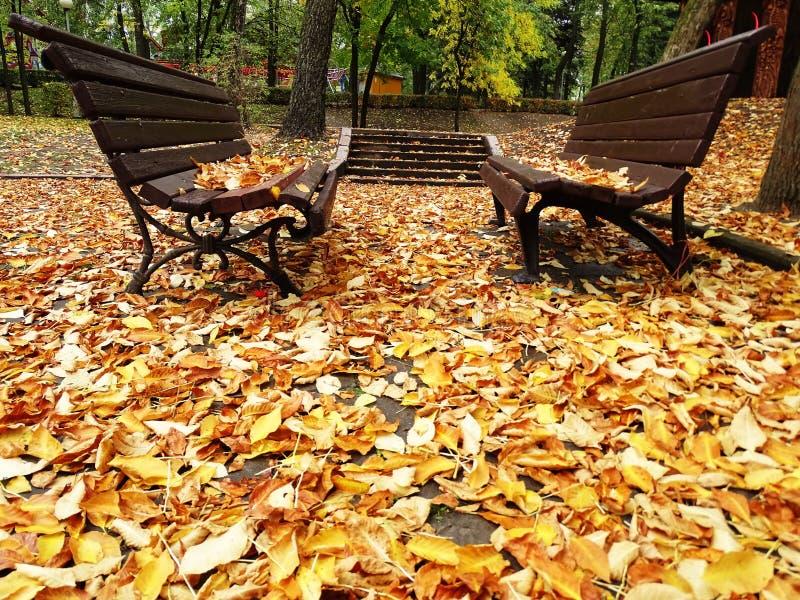 Två ensamma träbänkar i Autumn Park With royaltyfri bild