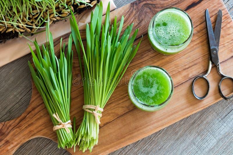 Två exponeringsglas av fruktsaft för korngräs med nytt skördat korn royaltyfria foton