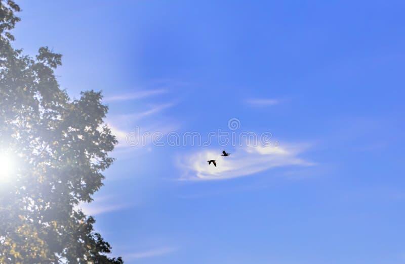 Två fåglar i blå himmel arkivfoto