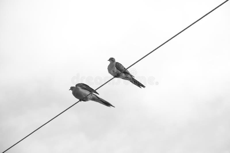 Två fåglar sid - vid - sidan på en tråd royaltyfri fotografi