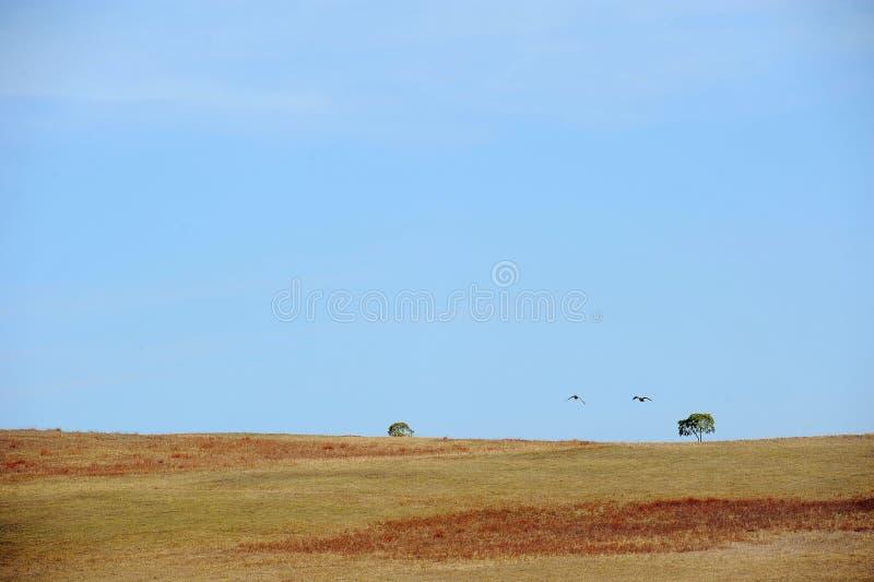 Två fåglar som flyger, och två träd i fältet under himmel royaltyfria bilder