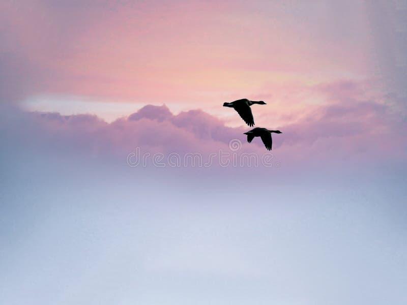 Två fåglar som flyger tillsammans av in i solnedgången arkivfoto