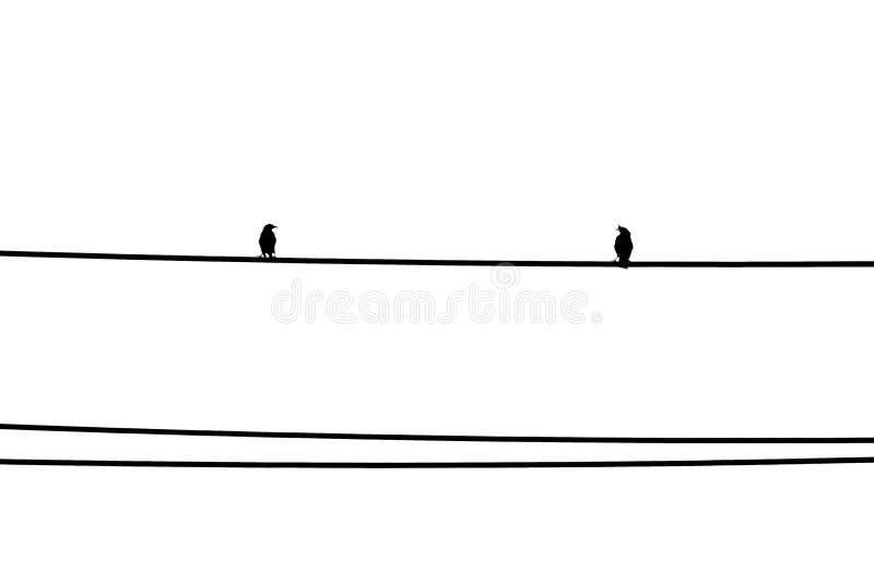 Två fåglar som står på tråden och att se de Svartvit minsta bakgrund royaltyfria bilder