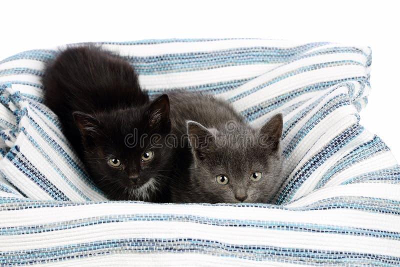 Två förtjusande en och en halv månader gamla kattungar, grått och svart med vit, på en trasamatta Studioskottet av gulligt behand arkivfoto