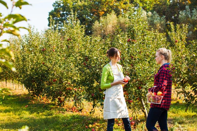 Två förtjusande kvinnor bland äppleträd på lantgården royaltyfria foton