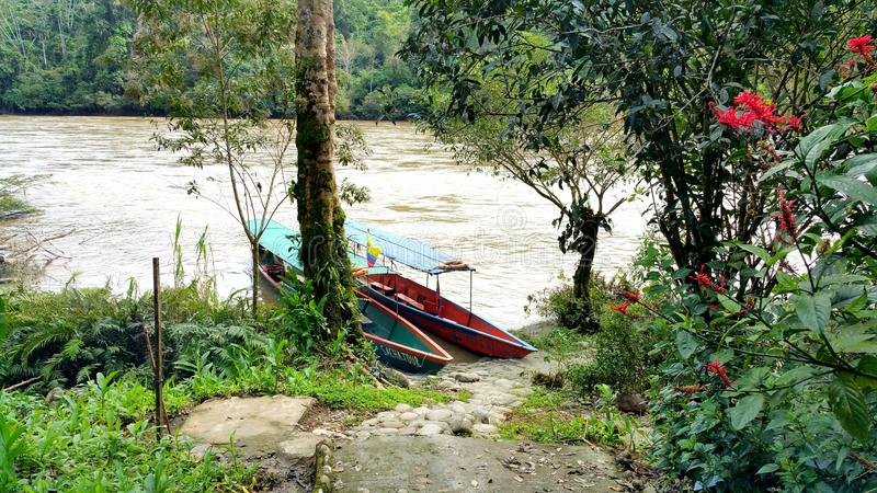 Två fartyg på floden i den amazon rainforesten royaltyfri fotografi