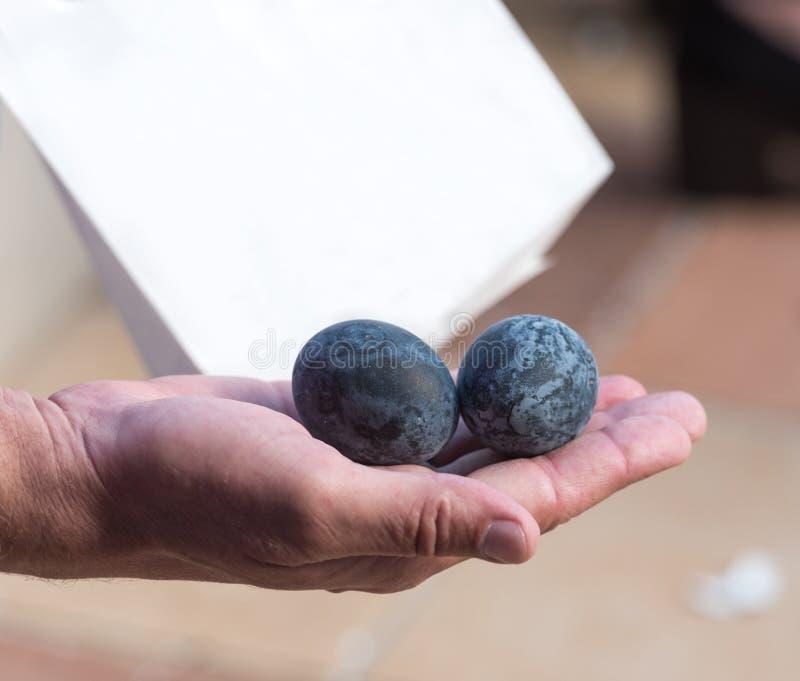 Två fega ägg för svart kokade i källor för vätesulfid, Hanoke, Japan Närbild royaltyfri bild