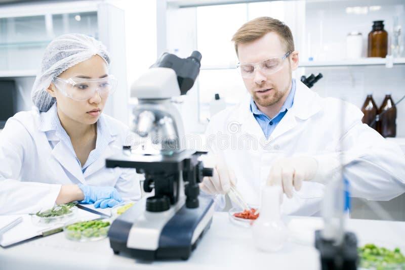 Två forskare som gör forskning i laboratorium arkivbilder