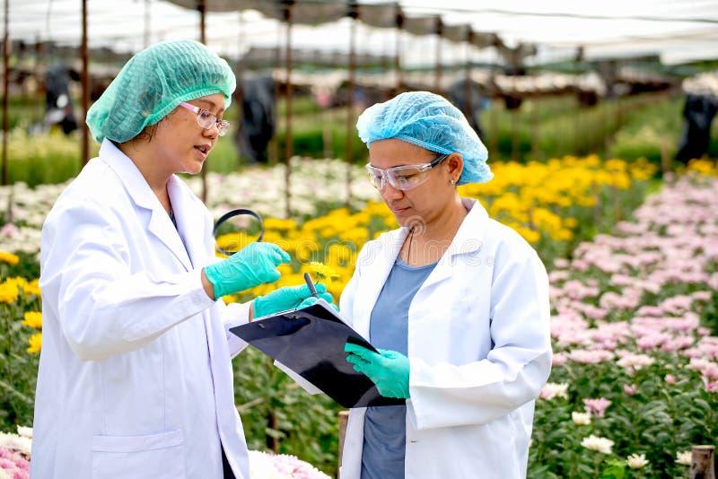 Två forskarekvinnor arbetar tillsammans i experimentellt fält av blommaträdgården, en kvinna för att kontrollera produkten och de fotografering för bildbyråer
