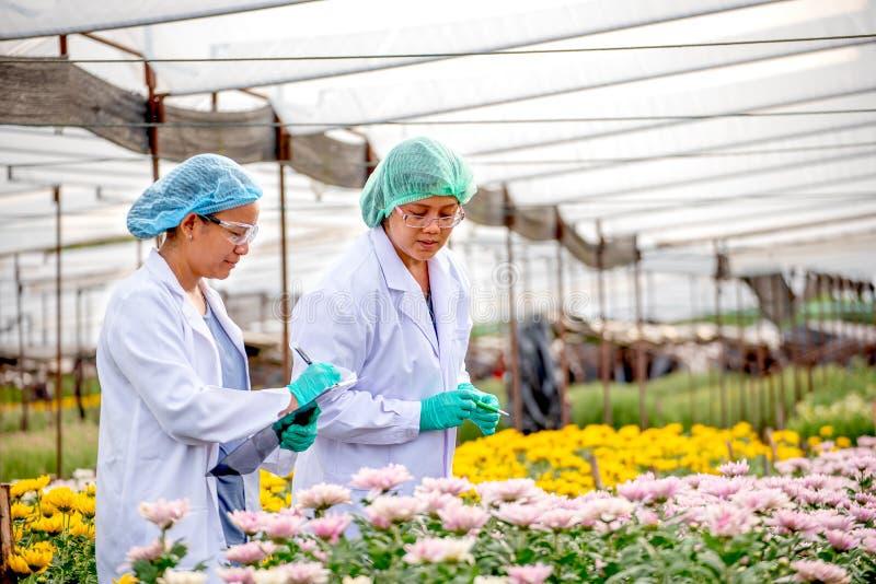 Två forskarekvinnor arbetar tillsammans i experimentellt fält av blommaträdgården, en kvinna för att kontrollera produkten och de royaltyfri foto