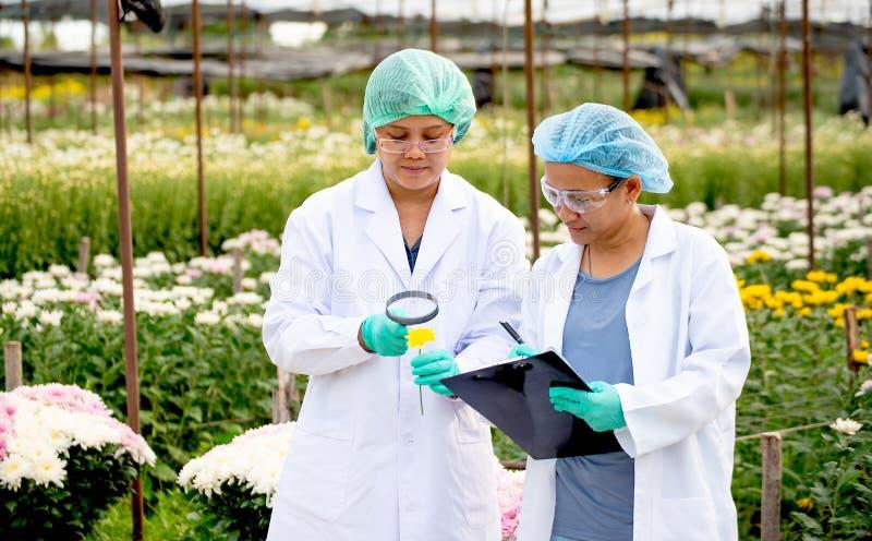 Två forskarekvinnor arbetar tillsammans i experimentellt fält av blommaträdgården, en kvinna för att kontrollera produkten och de royaltyfri bild