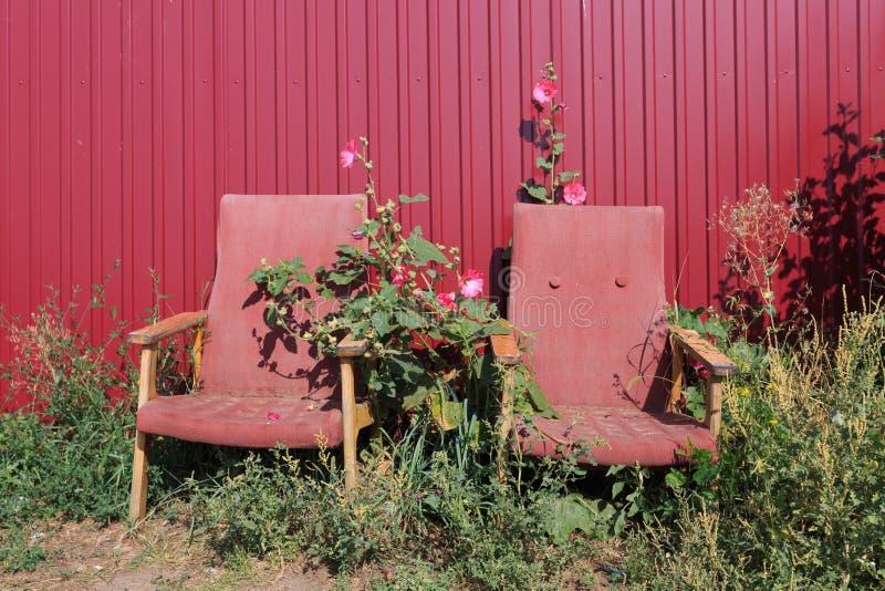 Två gamla rostiga tomma röda fåtöljer som står i blommor bredvid ett rött staket för metall arkivbilder