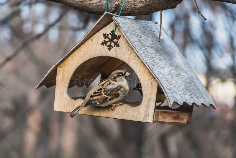 Två gråa fåglar en och den bruna sparven och en mes är i ett gammalt gult fågel- och ekorreförlagematarehus från kryssfaner i arkivfoton