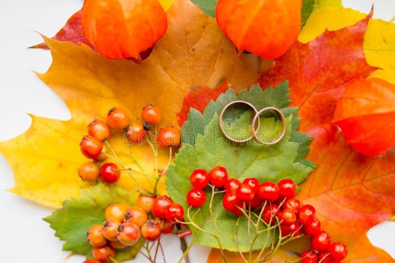Två guldbröllopcirklar, färgrika sidor Idérik säsongsbetonad höstbakgrund Gifta sig i nedgångsäsong 9 höstfärger royaltyfria bilder