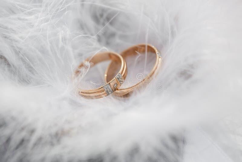 Två guldbröllopcirklar och fjädrar - stilla mjuk bakgrund för förbindelse arkivbild