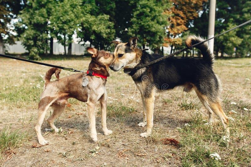 Två gulliga hundkapplöpning som talar att spela och att ha gyckel från skyddoutsid royaltyfri foto