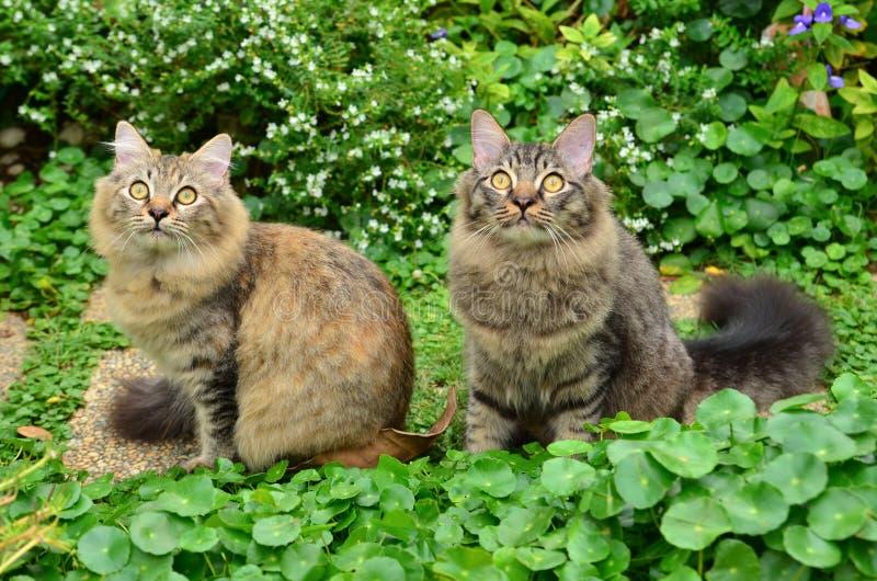 Två gulliga tabbykattungar royaltyfri bild