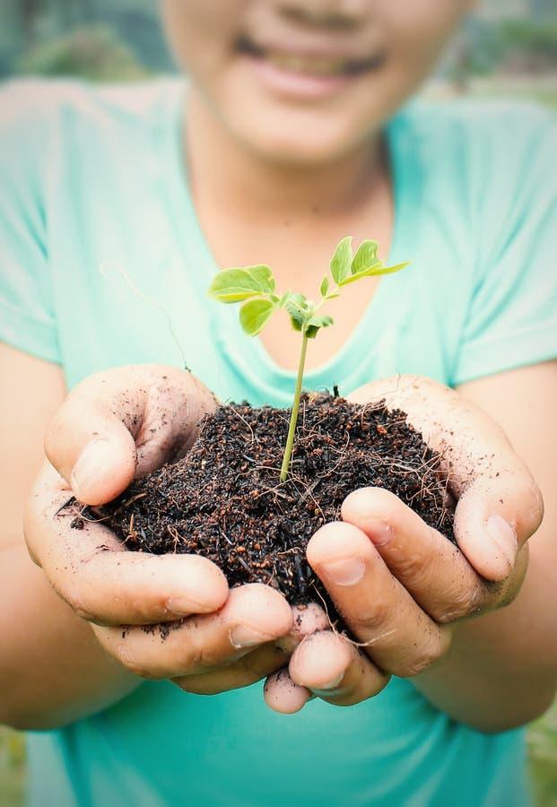Två händer som rymmer och att bry sig en ung grön växt arkivfoton
