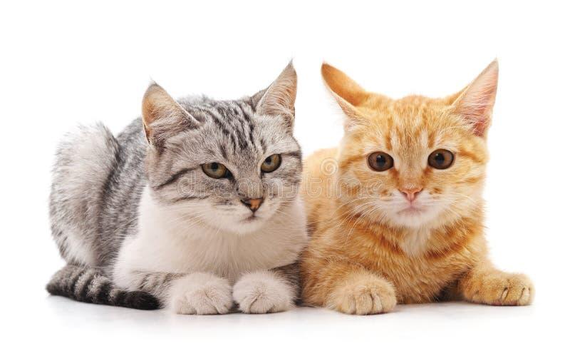 Två härliga katter arkivfoton