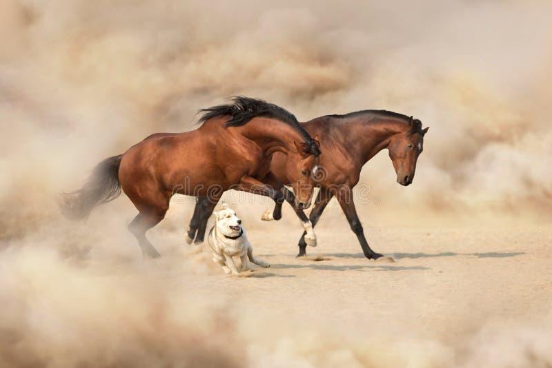 Två häst och hund arkivfoton