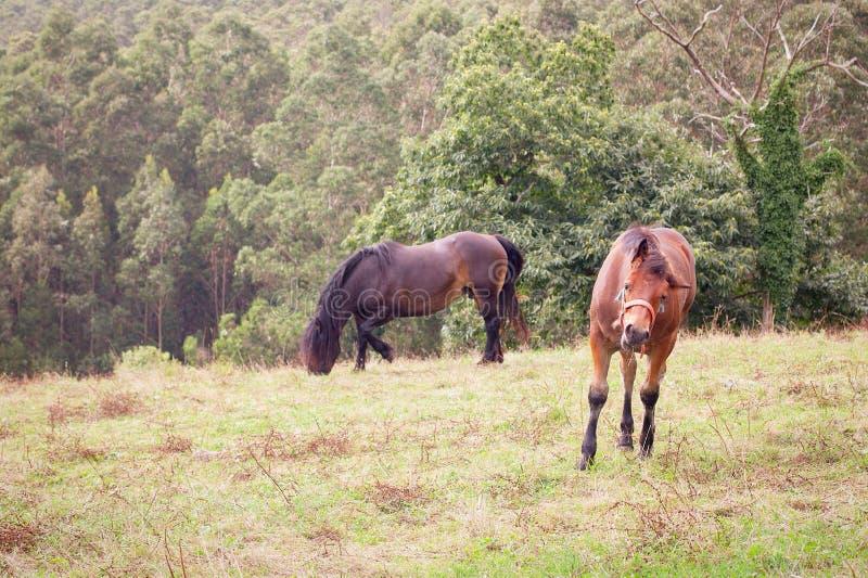 Två hästar i ett gräsfält royaltyfri foto