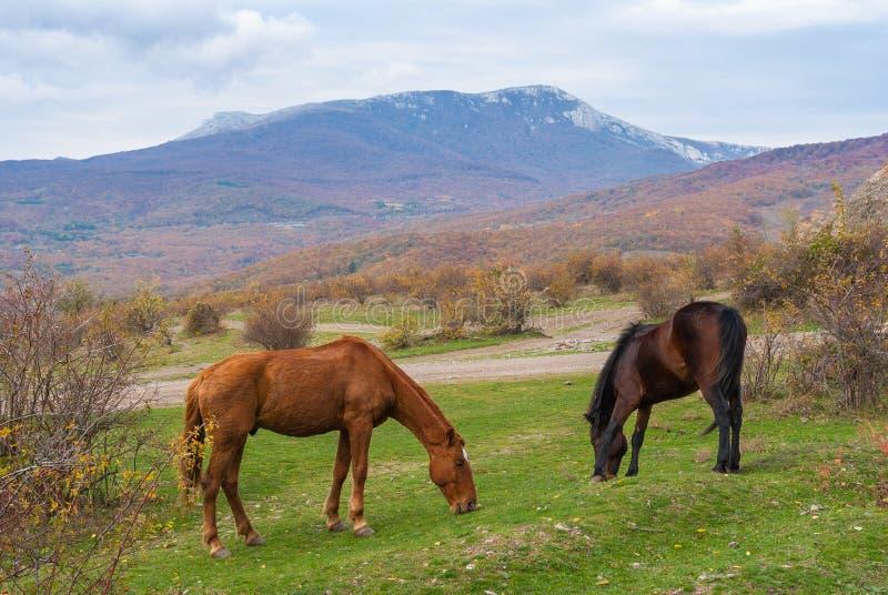 Två hästar som betar i berg royaltyfri fotografi