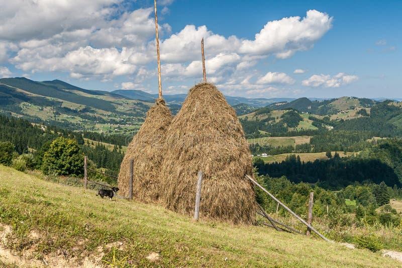 Två höstackar i bergen Härligt Carpathian landskap royaltyfria bilder