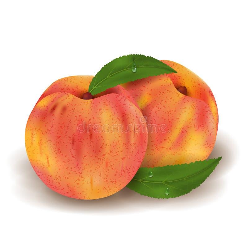 Två hela realistiska mogna persikor och gröna sidor med droppar Hög detalj för saftig illustration för frukt som 3d isoleras på v stock illustrationer