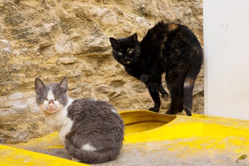 Två hemlösa aggressiva katter sitter på avskrädefack arkivbild