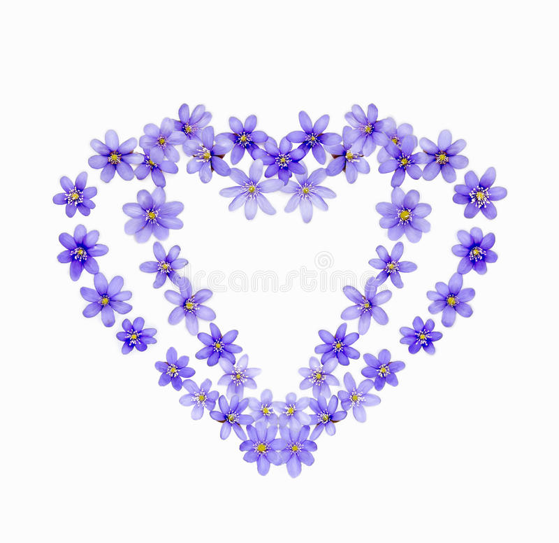 Två hjärtor av vår blommar blåsippor royaltyfria foton