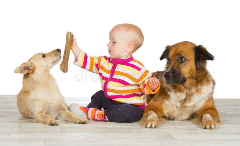 Två hundar som flankerar ett gulligt, behandla som ett barn arkivfoton