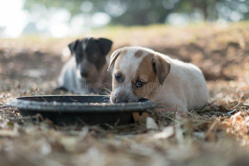 Två hundkapplöpning äter mat och lek med skämtsamma gester arkivfoto
