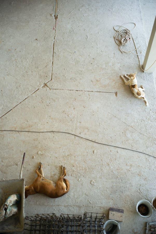 Två hundkapplöpning lägger på det smutsiga konkreta golvet på konstruktionen sitter royaltyfria foton